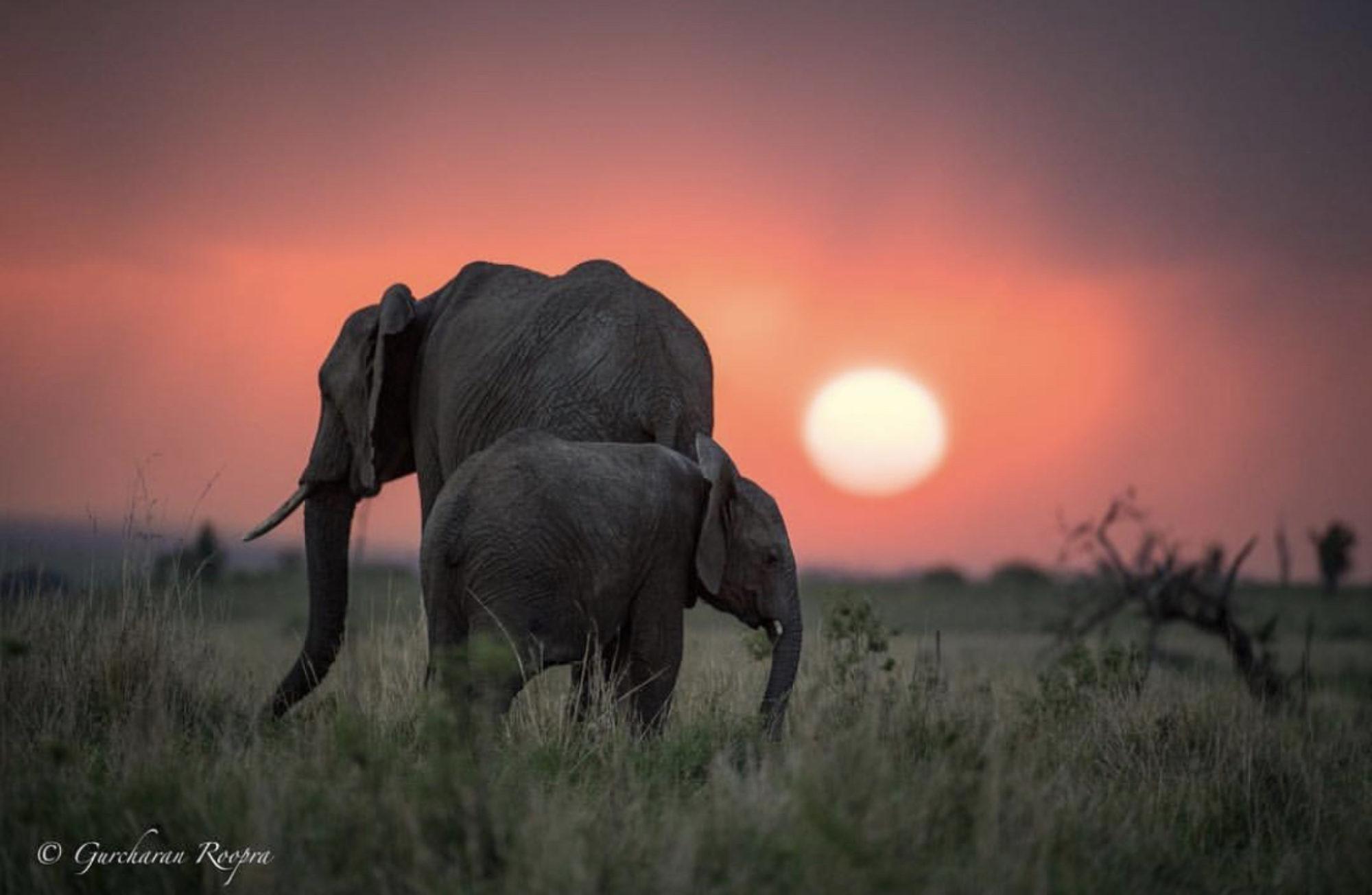 PRO ELEPHANT NETWORK